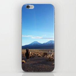 Alpacas in Sajama National Park iPhone Skin
