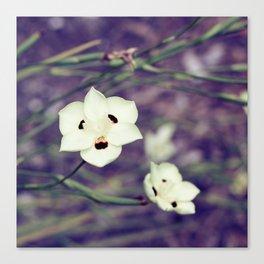 White Flowers with Orange & Black Detail Canvas Print