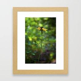 Cheery Susans Framed Art Print