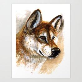 Dingo realistic Art Print