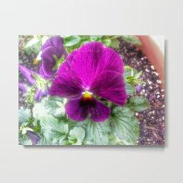 Violet Violas Metal Print
