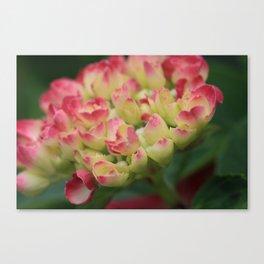 Hydrangea Canvas Print