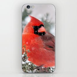 Winter's Beauty Cardinal iPhone Skin