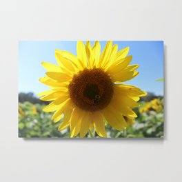 Yellow Sunflower and Bee Metal Print