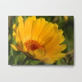 Yellow Daisy Flower Metal Print