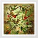 HUMMINGBIRD COLLAGE- Ernst Haeckel by digitaleffects