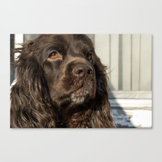 The Chocolate Cocker Spaniel Canvas Print