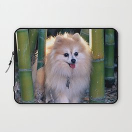 Buffy, the Celebrity Pomeranian, in Bamboo Forest Laptop Sleeve
