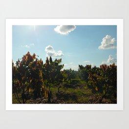 Cacao Fields Art Print