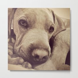 Dogs are Family Metal Print