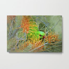 Australian Scaly Breasted Lorikeet Metal Print
