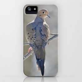 Mourning Dove on Winter Branch iPhone Case