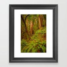 Redwoods Regional II Framed Art Print
