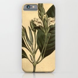 Flower 861 justicia adhatoda Malabar Nut10 iPhone Case