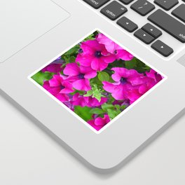 Beautiful pink petunias Sticker
