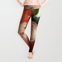 Prickly Pear Cactus Fruit - Indian Fig  Leggings