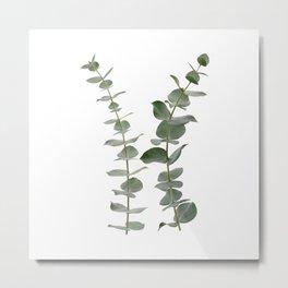 Eucalyptus Branches I Metal Print