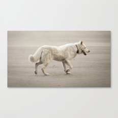 Whitey Canvas Print
