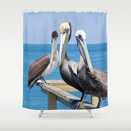 Larry, Curly and Moe Pelicans Shower Curtain