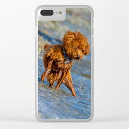 Toy Poodle playing in the water Clear iPhone Case