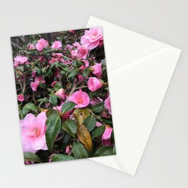 Vibrant pink roses in Scotland Stationery Cards