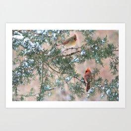 Winter Pair: Cardinals Art Print