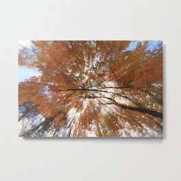 Forest upside down, fall leaves, sky, shadows Metal Print