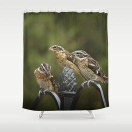 Grosbeaks Three Shower Curtain