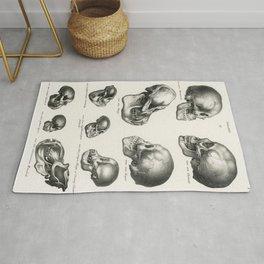 Human Monkey and Ape skulls from Volledige Natuurlijke Historie der Zoogdieren(1845) by schinz de Visser Rug