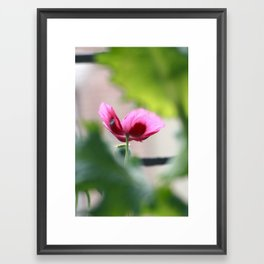 Purple Poppy on a San Francisco Fire Escape Framed Art Print
