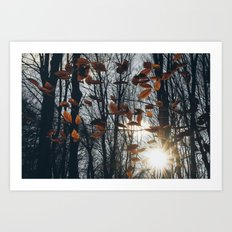 Fall Light Art Print