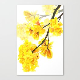 yellow trumpet trees watercolor yellow roble flowers yellow Tabebuia Canvas Print