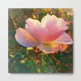 Jerusalem Rose In Full Bloom Metal Print