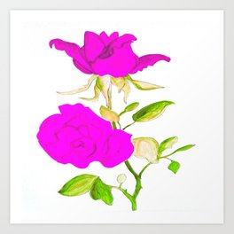 Magnificent rose Art Print