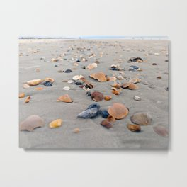 Seashells on the Shore Metal Print