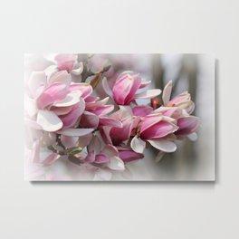 Magnolias Vignette Metal Print