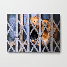 Sleepy street cat Metal Print