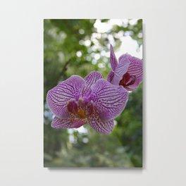 Purple Phal Metal Print
