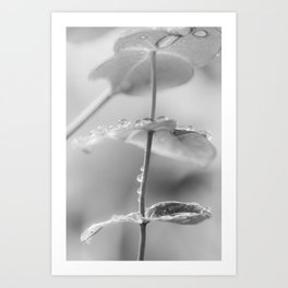 the art of peace (black and white) Art Print