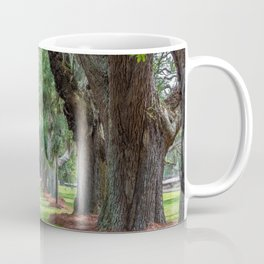 Avenue of Oaks Over Grass Coffee Mug