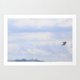 Arctic Tern Art Print