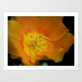 Macro Tulip Art Print
