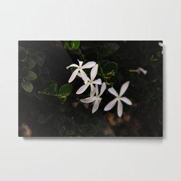 white plumeria Metal Print