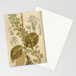 Macodes sanderiana, Orchidaceae 1918 Stationery Cards