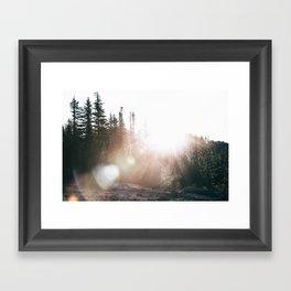 Sunny Forest III Framed Art Print