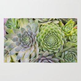 Bountiful Succulents Rug