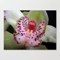 orchid Canvas Prints featuring Orchid by Vitta