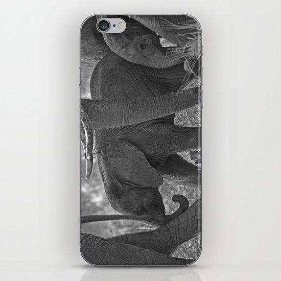 ELEPHANT WALK iPhone & iPod Skin