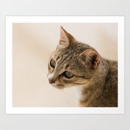 Cretan Cat Portrait Art Print