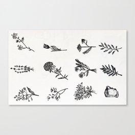 Botanical poster Canvas Print